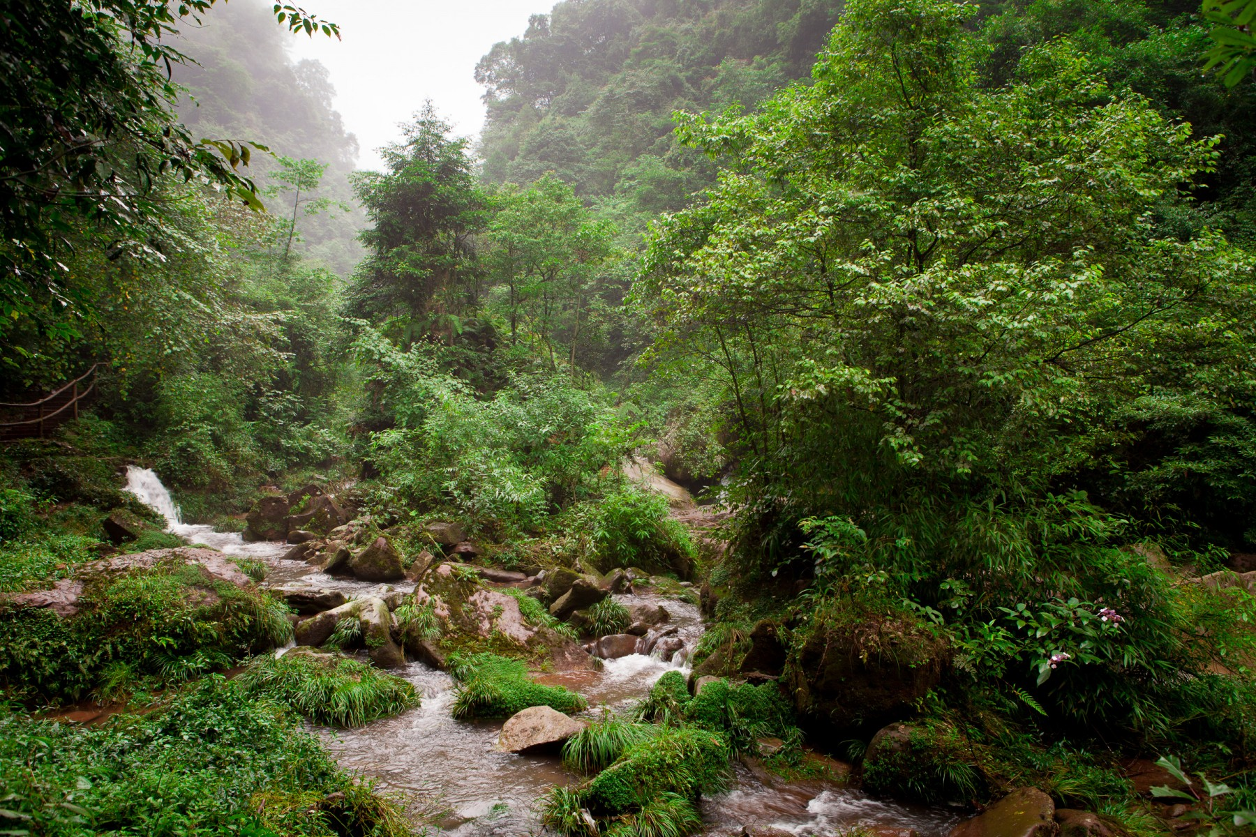 Jungle in Bifengxia gorge in Ya'an, Sichuan province, China.