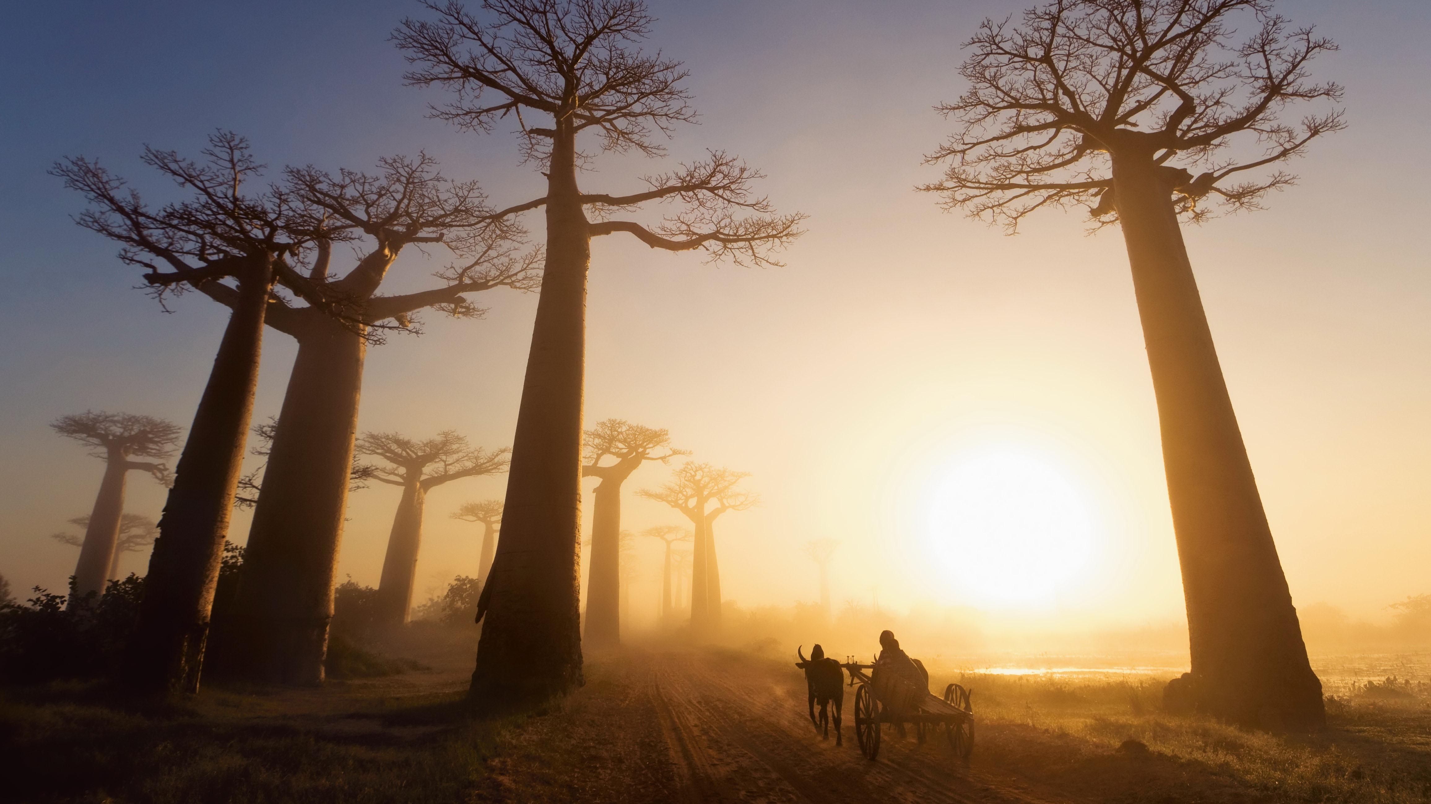 oxcart-baobab-trees-madagascar-by-marsel-van-oosten