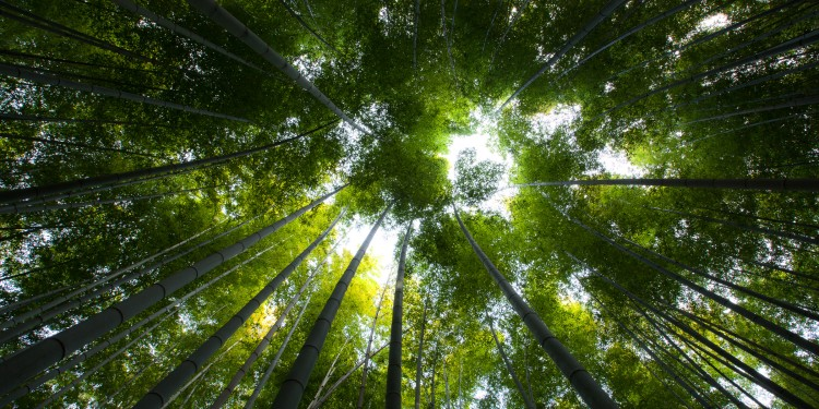 Arashiyama-Sagano district in Western Kyoto.  The parks and bamboo forest were set aside in the 14th century by the then shogun, Ashikaga Takauji, in a gesture of mourning for the Emperor.