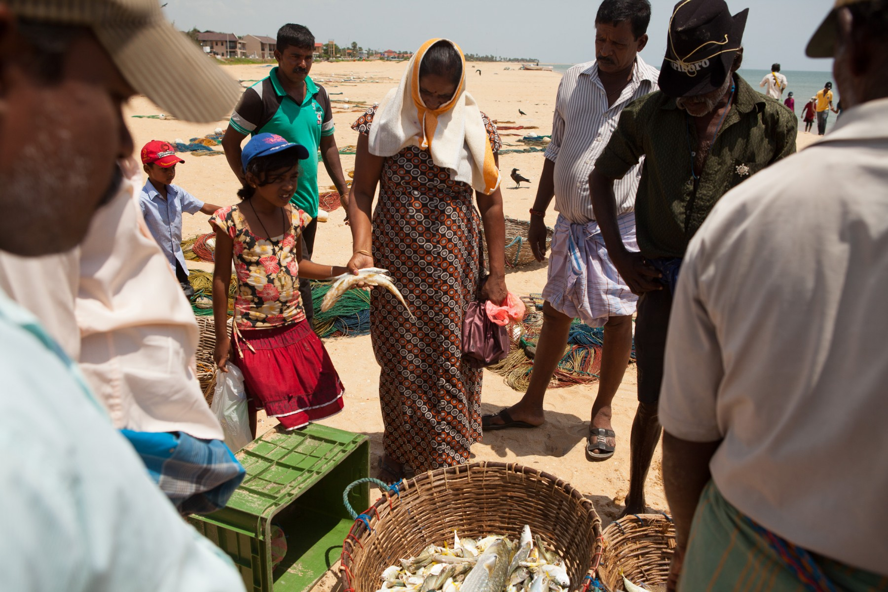 Residents of Mullaitivu on the beach to collect seafood so fresh it's still kicking.