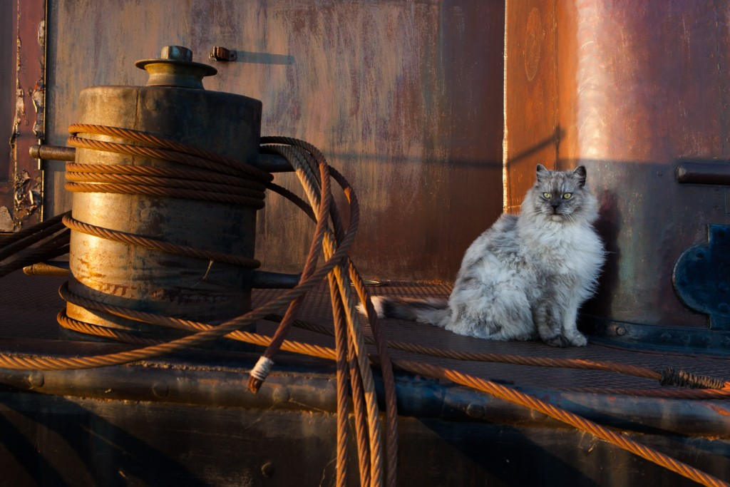 Cat aboard a houseboat in Houthaven, Amsterdam.