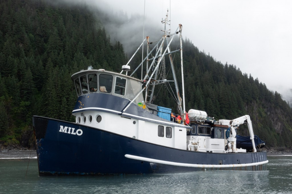 The M/V Milo is a former commercial fishing vessel built to the 58' limit for purse seiner boats. Since 2009 Mike has been converting the Milo as a charter boat - making Ocean Swell Ventures the only long-range surf charter in Alaska.