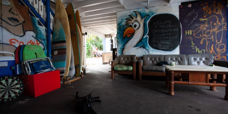 The undercroft at Elephit House with our friendly Mother Cat. Bonus insta handles on the blackboard for the OG Hawaiians that live upstairs.